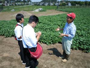 干し芋 畑